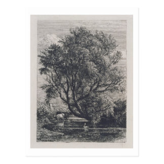 The Willow (etching) Postcard