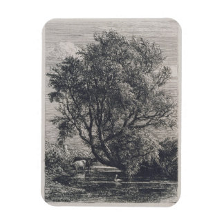 The Willow (etching) Rectangular Photo Magnet