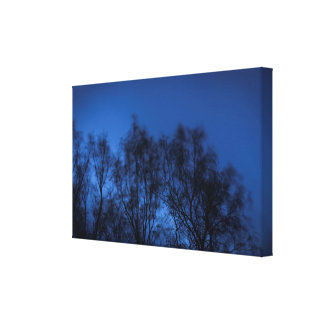 The wind and trees canvas print