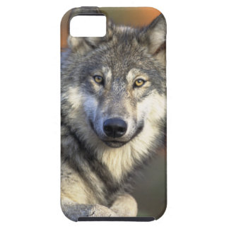 The Wolf Tough iPhone 5 Case