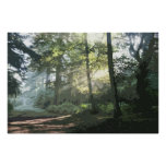 THE WOODLAND PATH 4 POSTER