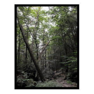 the Woods ~ 25 Postcard