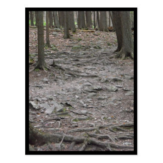 the Woods ~ 29 Postcard