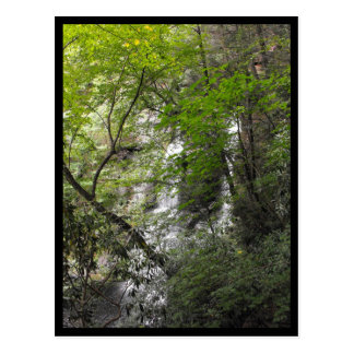 the Woods ~ 41 Postcard