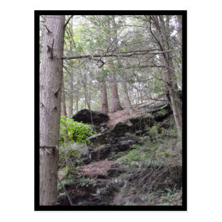 the Woods ~ 4 Postcard