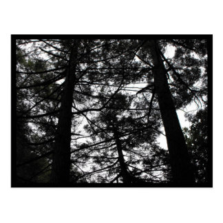 the Woods ~ 6 Postcard