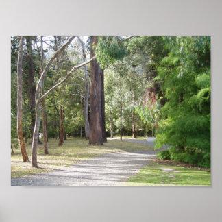 The Woods of Dunedin s Botanical Gardens Print