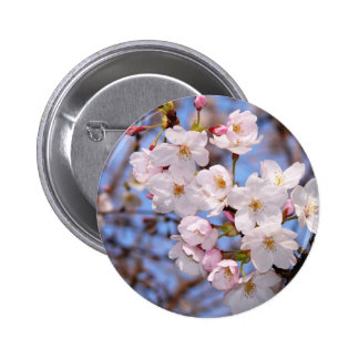 The work of the cherry tree bloom which is Kobe 6 Cm Round Badge