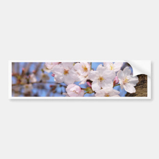 The work of the cherry tree bloom which is Kobe Bumper Sticker