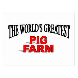 The World s Greatest Pig Farm Postcard