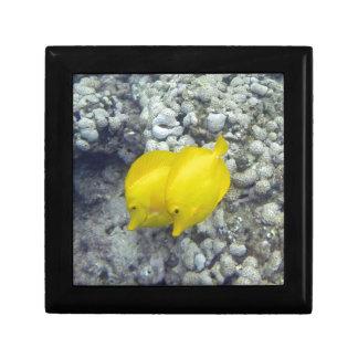 The Yellow Tang Fish Small Square Gift Box