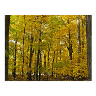 The Yellow Woods Post Cards