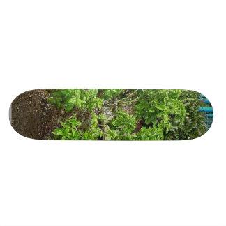 Theme Park Basil Custom Skateboard