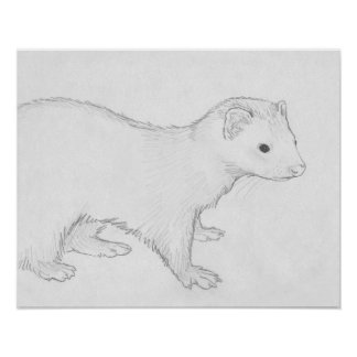 """Theo"" Ferret Drawing Poster"