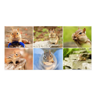 Theo the Amigo Chipmunk Collage Photo Greeting Card