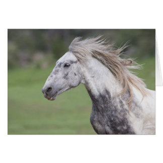 Theodore Runs: Galloping to Freedom Greeting Card