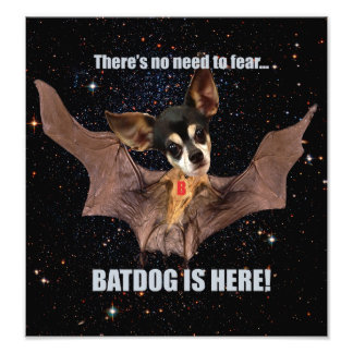 There s no need to fear Batdog is here Photograph