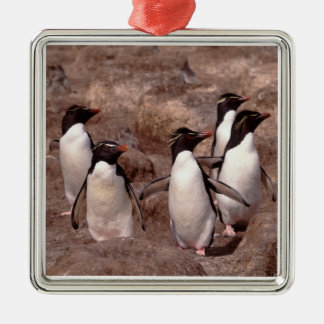 These five Rockhopper Penguins (Eudyptes Silver-Colored Square Decoration
