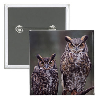 These Great Horned Owls (Bubo virginianus), 15 Cm Square Badge