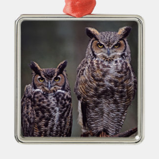 These Great Horned Owls (Bubo virginianus), Christmas Ornament