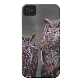 These Great Horned Owls (Bubo virginianus), iPhone 4 Case-Mate Case