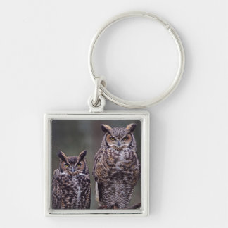These Great Horned Owls (Bubo virginianus), Key Ring