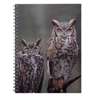 These Great Horned Owls (Bubo virginianus), Note Book