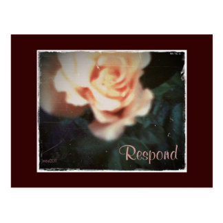 These Quiet Seasons August Rose Postcard