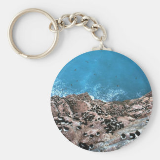 Thick-billed Murre Colony, Hudson Bay, NWT, Canada Basic Round Button Key Ring