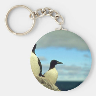Thick-billed Murres, Hudson Bay, NWT, Canada Basic Round Button Key Ring