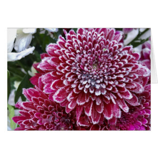 Thick frost on Pink Chrysanthemum Bouquet Close Up Card