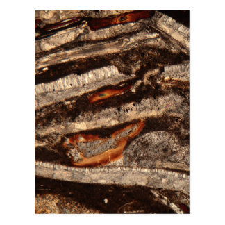 Thin section of fossil calcareous shell fragments postcard