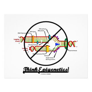 Think Epigenetics! (Cross Out DNA Replication) Full Color Flyer