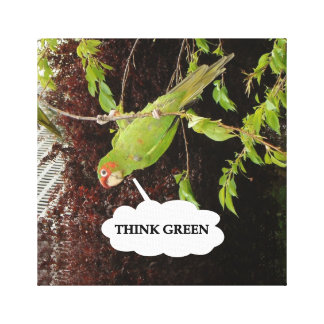 Think Green Red Masked Parakeet Gallery Wrap Canvas