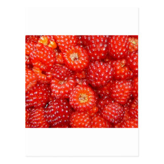 THINK RASPBERRY! POSTCARD