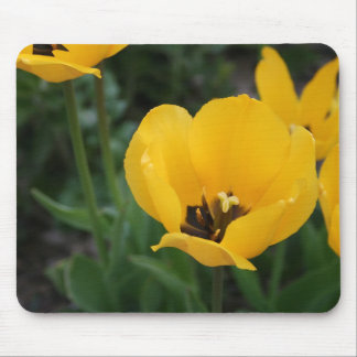 Think Spring Mouse Mat