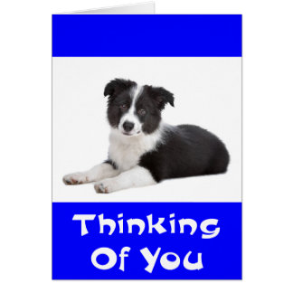 Thinking of Border Collie Puppy Dog Card