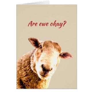 Thinking of  Ewe  Funny Sheep Animal Humour Card