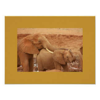 Thinking Of You African Elephants Poster