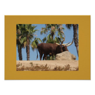 Thinking Of You African Watusi Cattle Posters