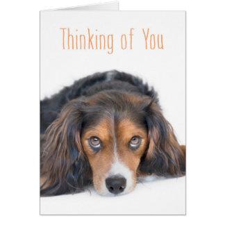 Thinking of You - Beautiful Dog with Soulful Eyes Greeting Card