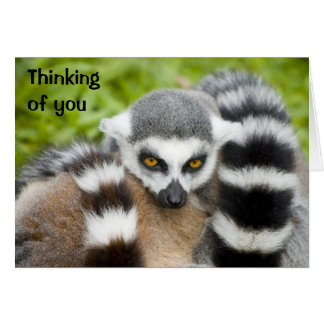 Thinking of you Card - Cute Lemur Stripey Tail