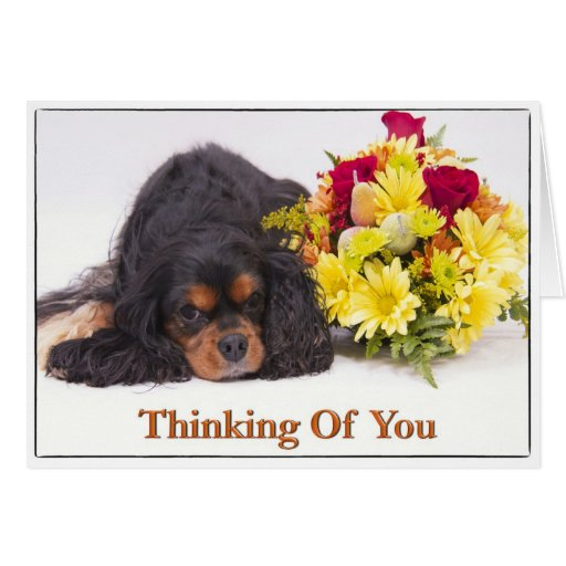 Thinking Of You Cavalier King Charles Spaniel Card