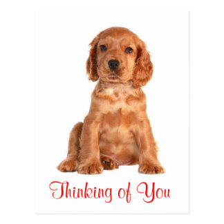 Thinking of You Cocker Spaniel Puppy Dog Postcard