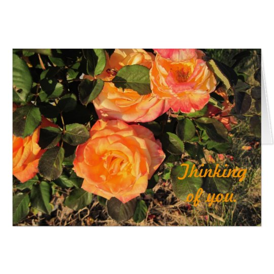 Thinking of You: Coral roses Card