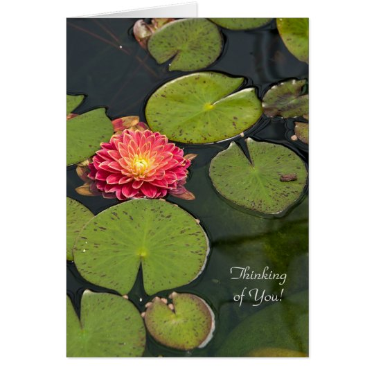 Thinking of You dahlia in lily pads Card