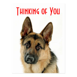 Thinking Of You German Shepherd Puppy Dog Postcard