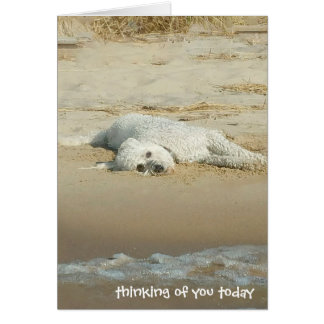 thinking of you-goldendoodle laying on beach card
