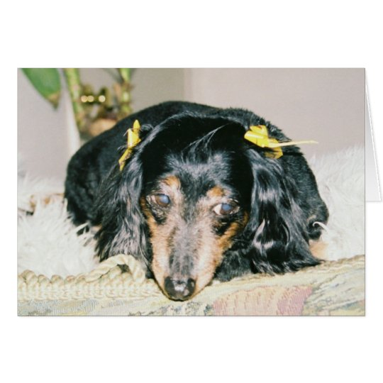 THINKING OF YOU GREETING CARDS - DACHSHUND MINI
