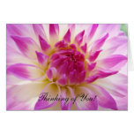 Thinking of You! Greeting Cards Pink White Dahlia